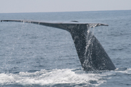 Dana Wharf Sportfishing & Whale Watching